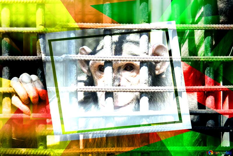 Chimpanzee Creative abstract Geometrical Future Trend template frame №4566