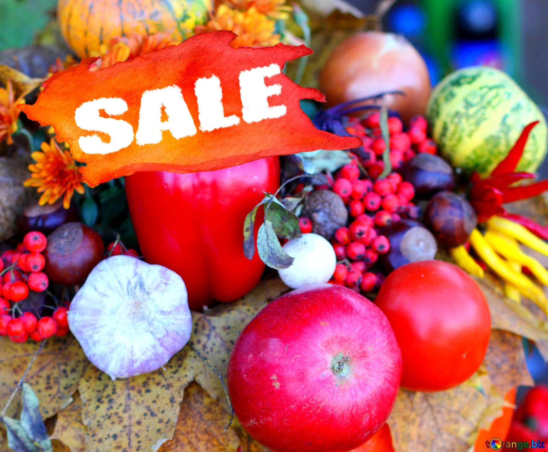 Download Free Picture Autumn Vegetables Sale Store Shop Banner On Cc By License Free Image Stock Torange Biz Fx 194972