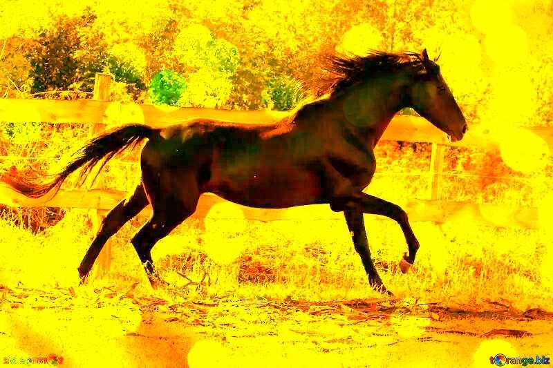 Run horse gold card №36651