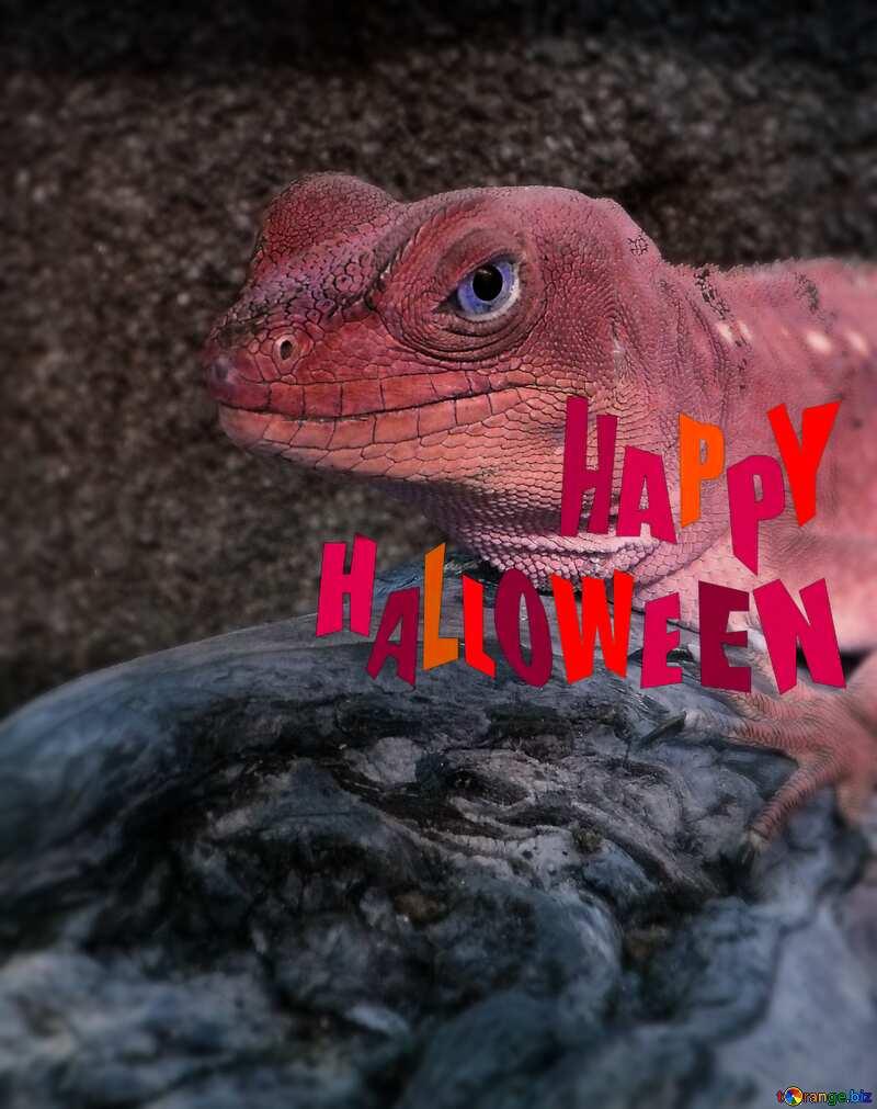 Lizard happy halloween №10697
