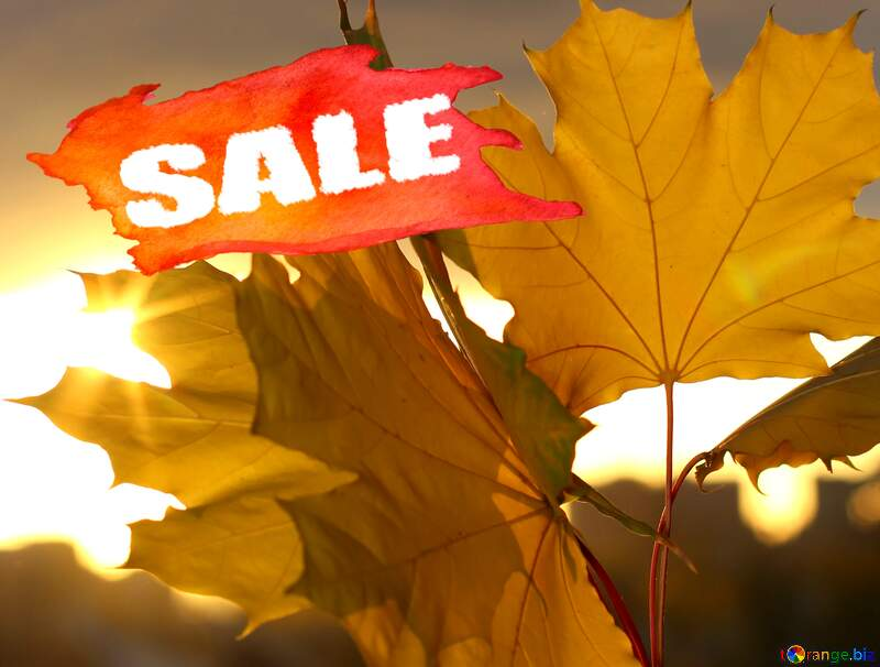 Autumn leaves sale discount banner design background №40887