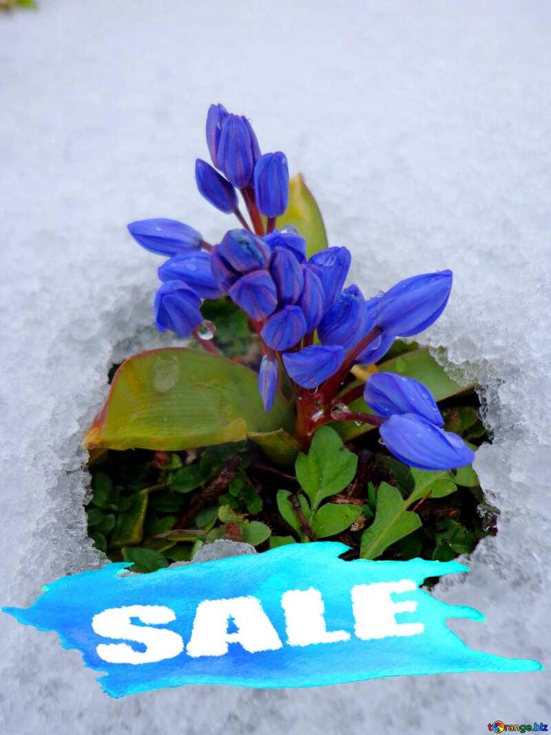 Flower under snow Sale Background №43139
