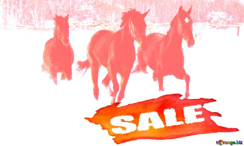 Three horses run in the snow Sale background №3981