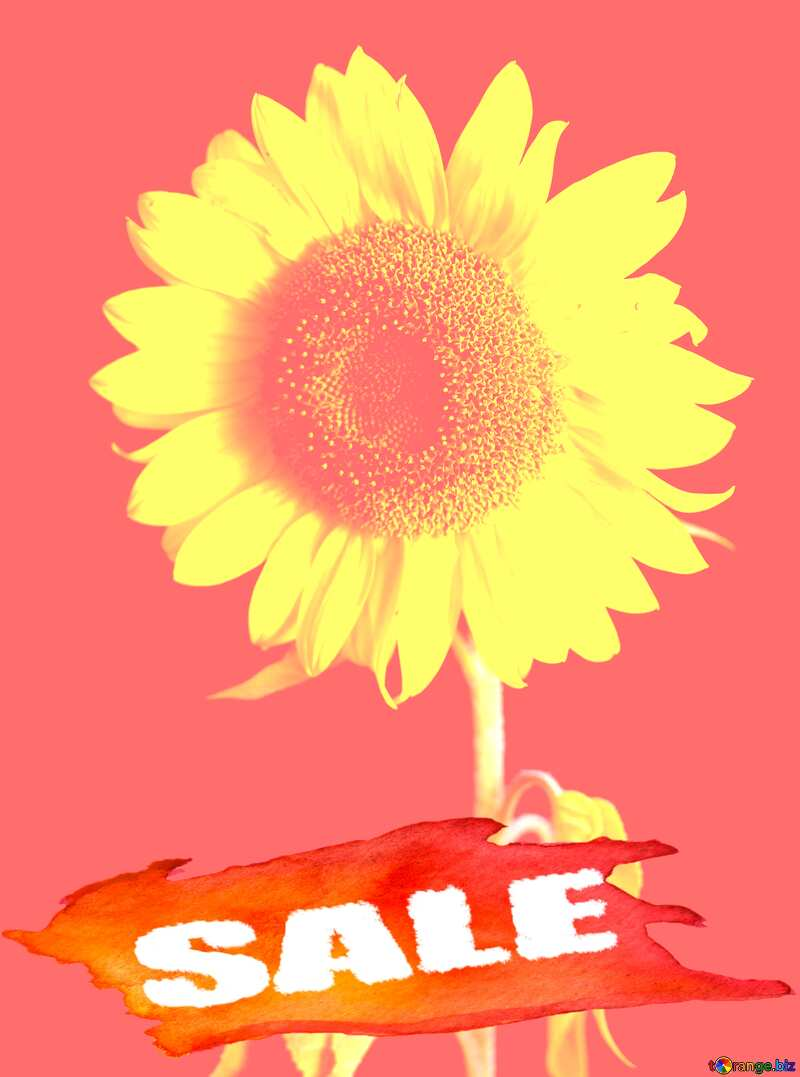 Summer Hot Sale background Frame Sunflower Flower №32798