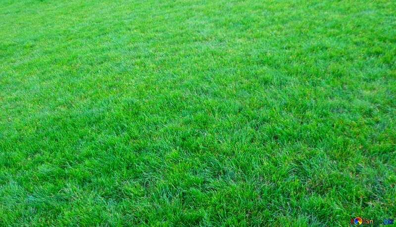 Green  lawn grass  texture №13911