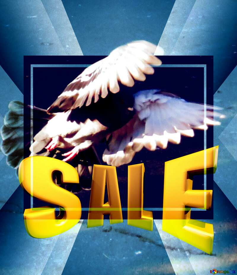 Pigeon flies Sales promotion 3d Gold letters sale background Template №42207