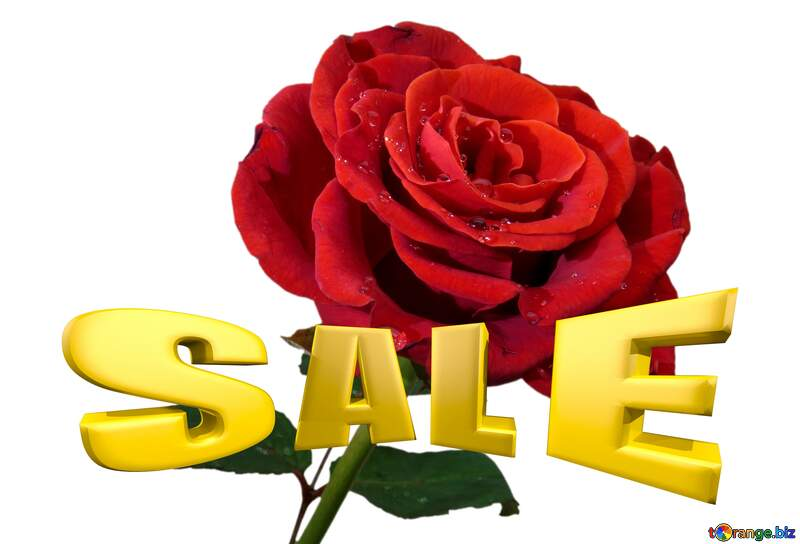 Rose background with drops Sales promotion 3d Gold letters sale background Template №17091