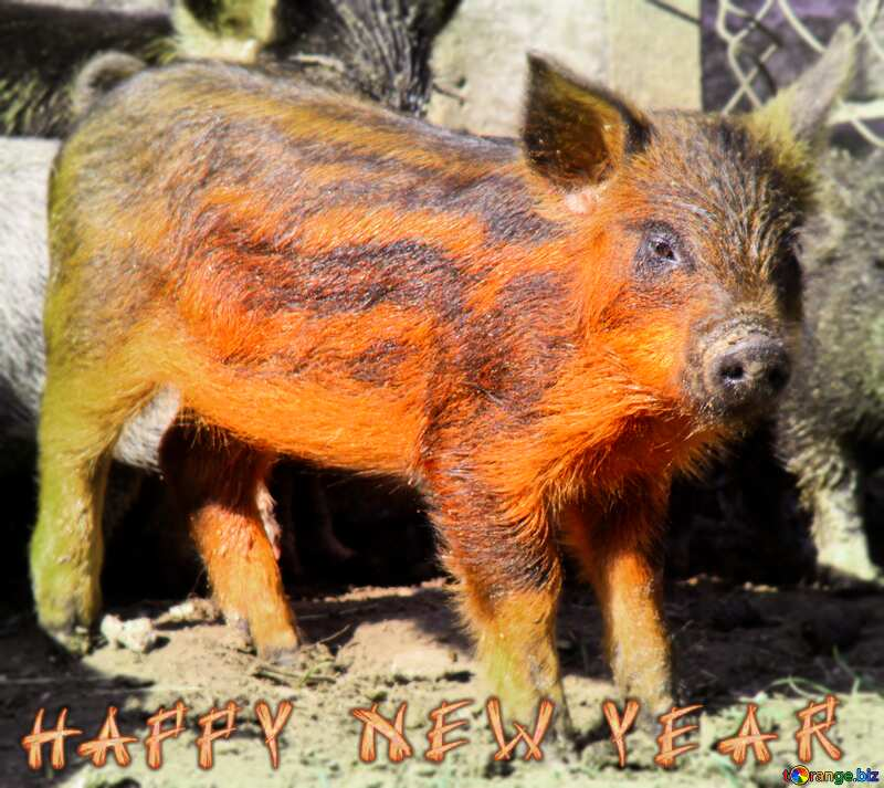 Real Pig Happy New Year №1262