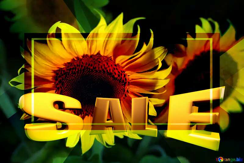 Beautiful flowers of sunflower Sales promotion 3d Gold letters sale background №32817