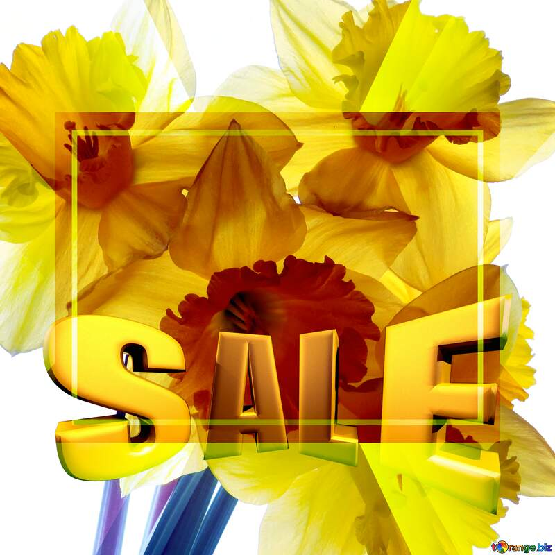 A bouquet of daffodils isolated Sales promotion 3d Gold letters sale background Template №30946
