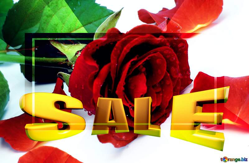 Rose flower and petals Sales promotion 3d Gold letters sale background Template №16875