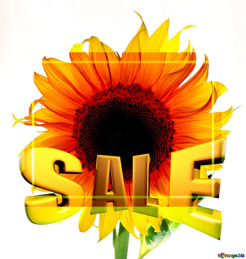 Flower sunflower isolated Sales promotion 3d Gold letters sale background Template №32785