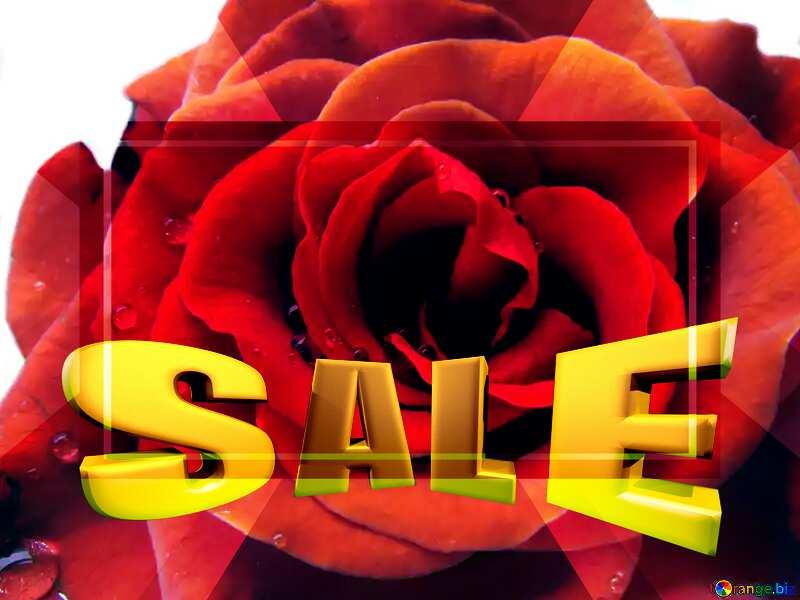 Rose flower Template frame Sales promotion 3d Gold letters sale background Template №17115