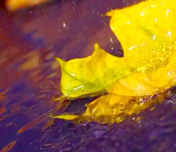 image profile picture desktop wallpaper autumn rain 2795