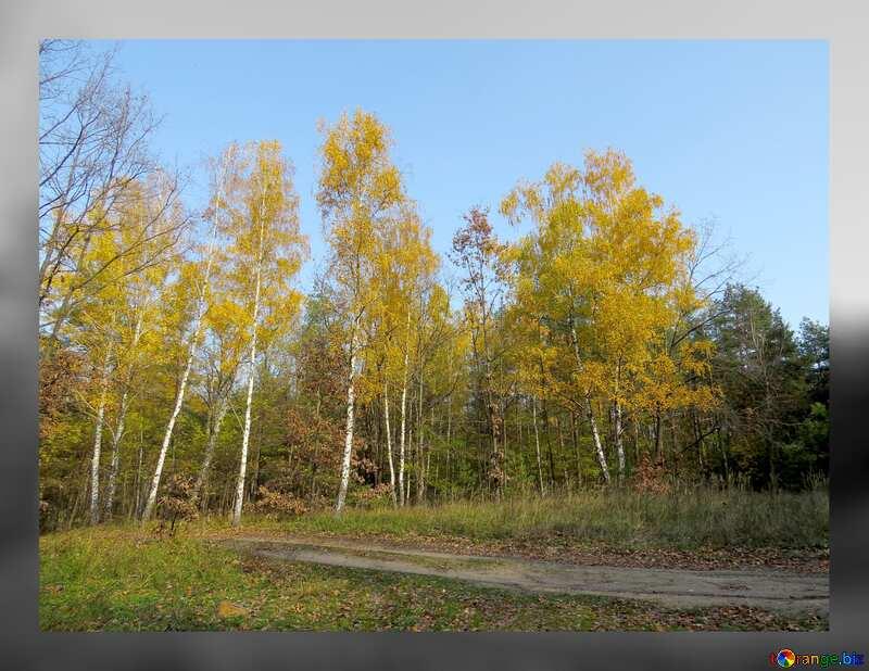Wallpaper beautiful autumn landscape grey fuzzy border №24894