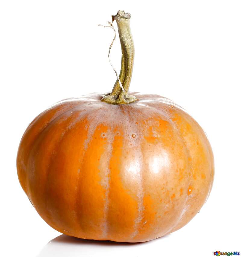Pumpkin without background №34970