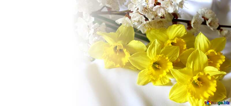 Template background for the label. Spring flowers. №29971