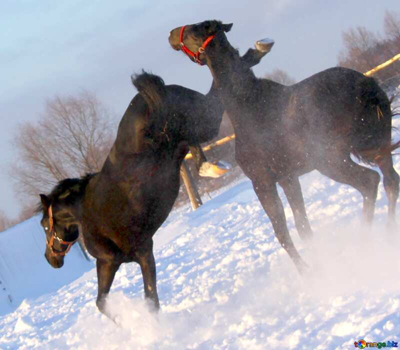 Image for profile picture Horse kick. №3959