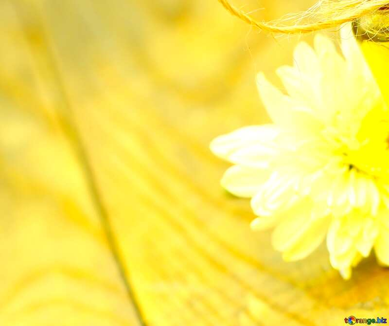 Image for profile picture Natural oil background blank with a flower. №46215