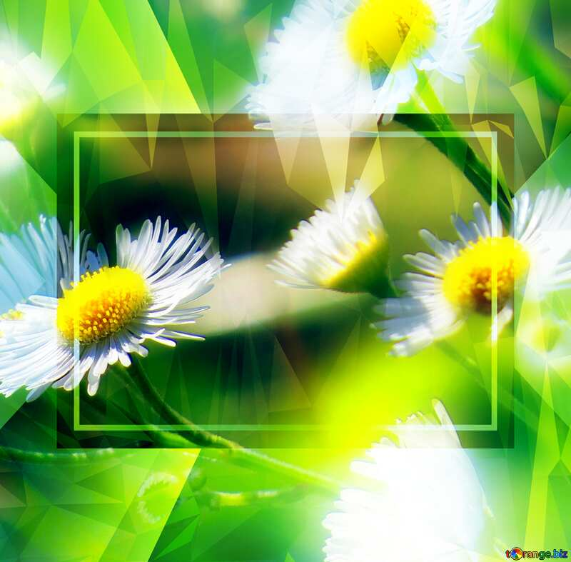 Daisies Polygon background with triangles №34394