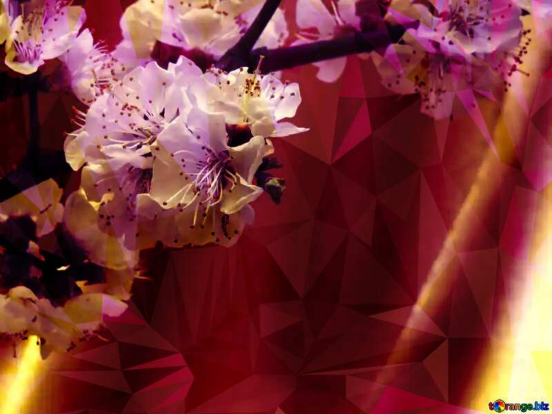 Spring flowering tree Polygon background with triangles №29950