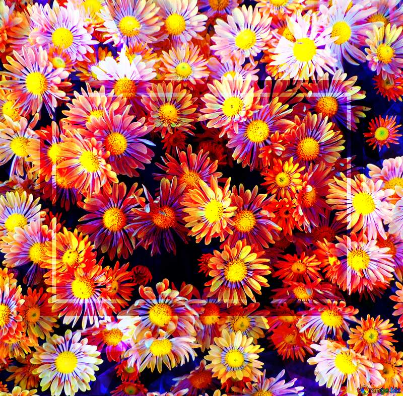 Chrysanthemums Flowers Template Polygonal abstract geometrical background with triangles №14214