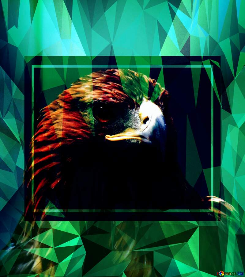 Golden eagle Template Polygonal abstract geometrical background with triangles №45229