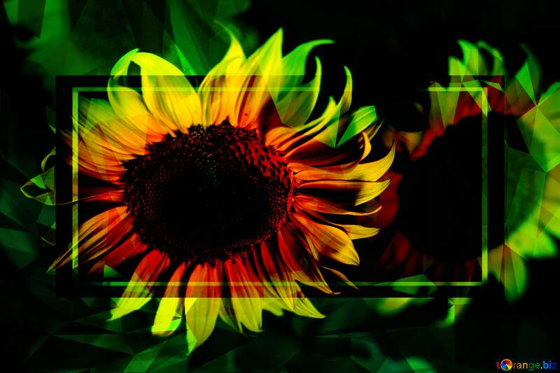 Beautiful flowers of sunflower Polygonal abstract geometrical background with triangles №32817