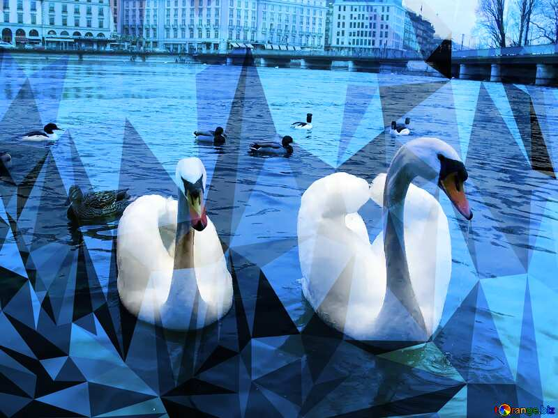 Two white swans have laid down their wings in the form of heart on the background of ducks. Switzerland. Geneva. Quay Mont Blanc. Polygonal abstract geometrical background with triangles №386