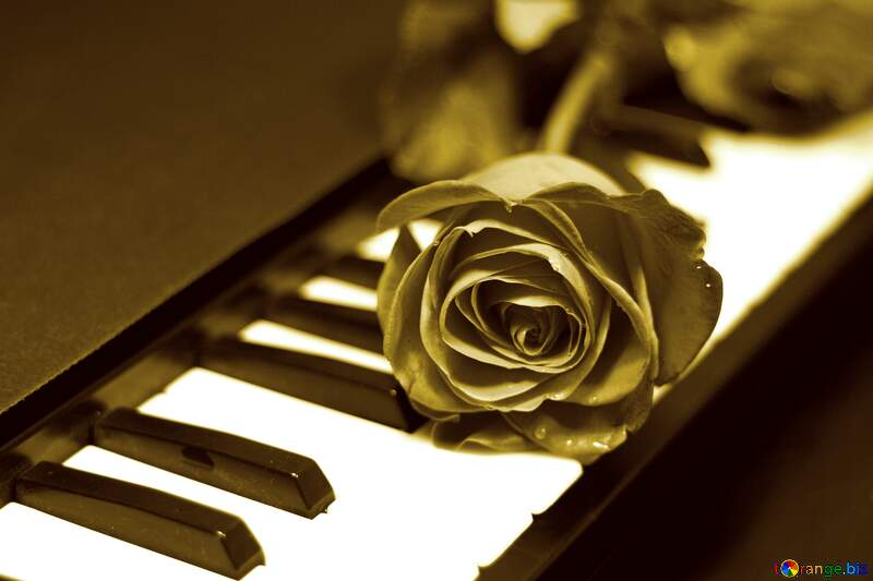 Rose on keys piano style  stained №7198