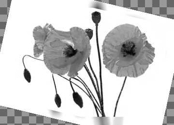 The effect of contrast. The effect of black and white. Grey Fuzzy Border.