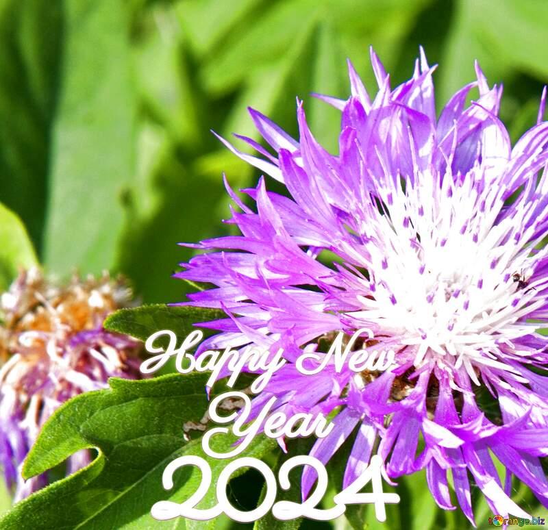 Cornflower  happy new year 2022 №3248