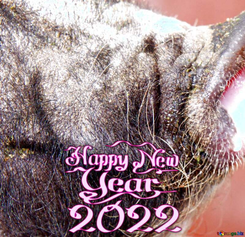Happy new year 2021 pig №1955
