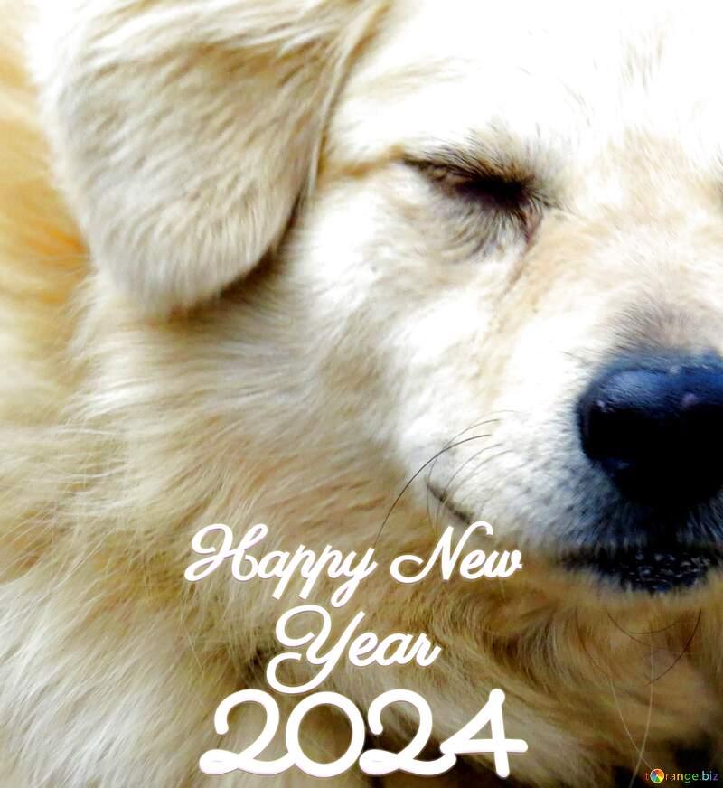 happy new year 2021 dog №23936