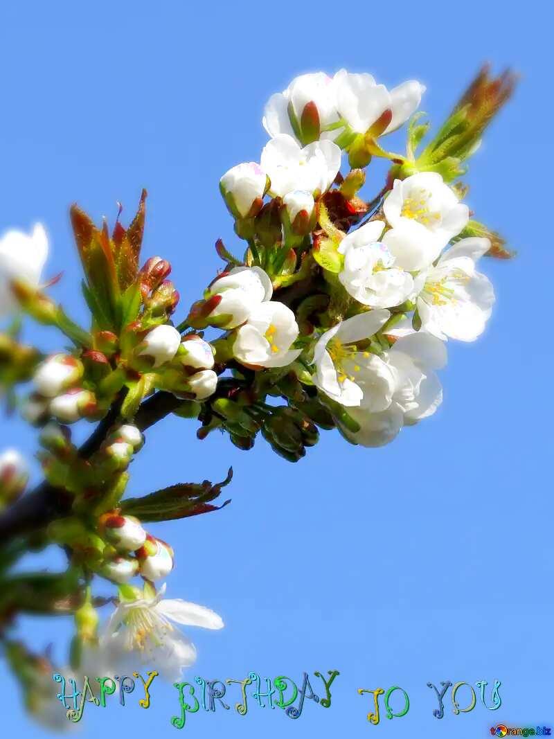 happy  birthday spring flowers №24405