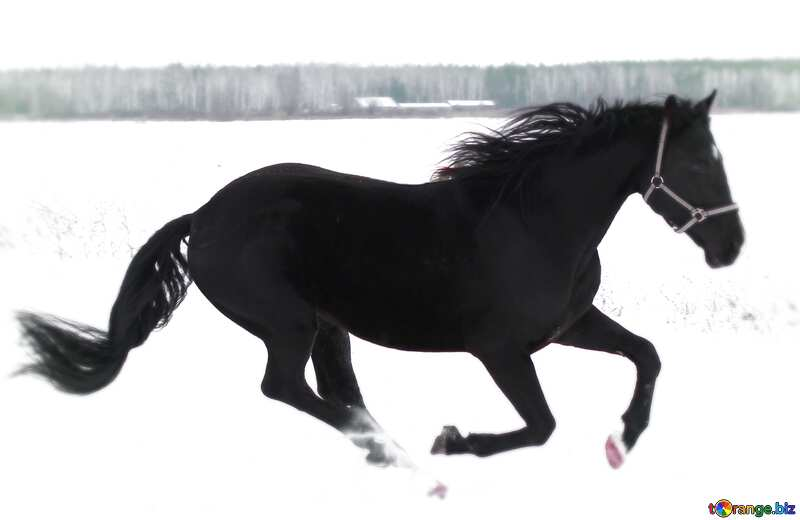 Horse in the snow blur frame №18191