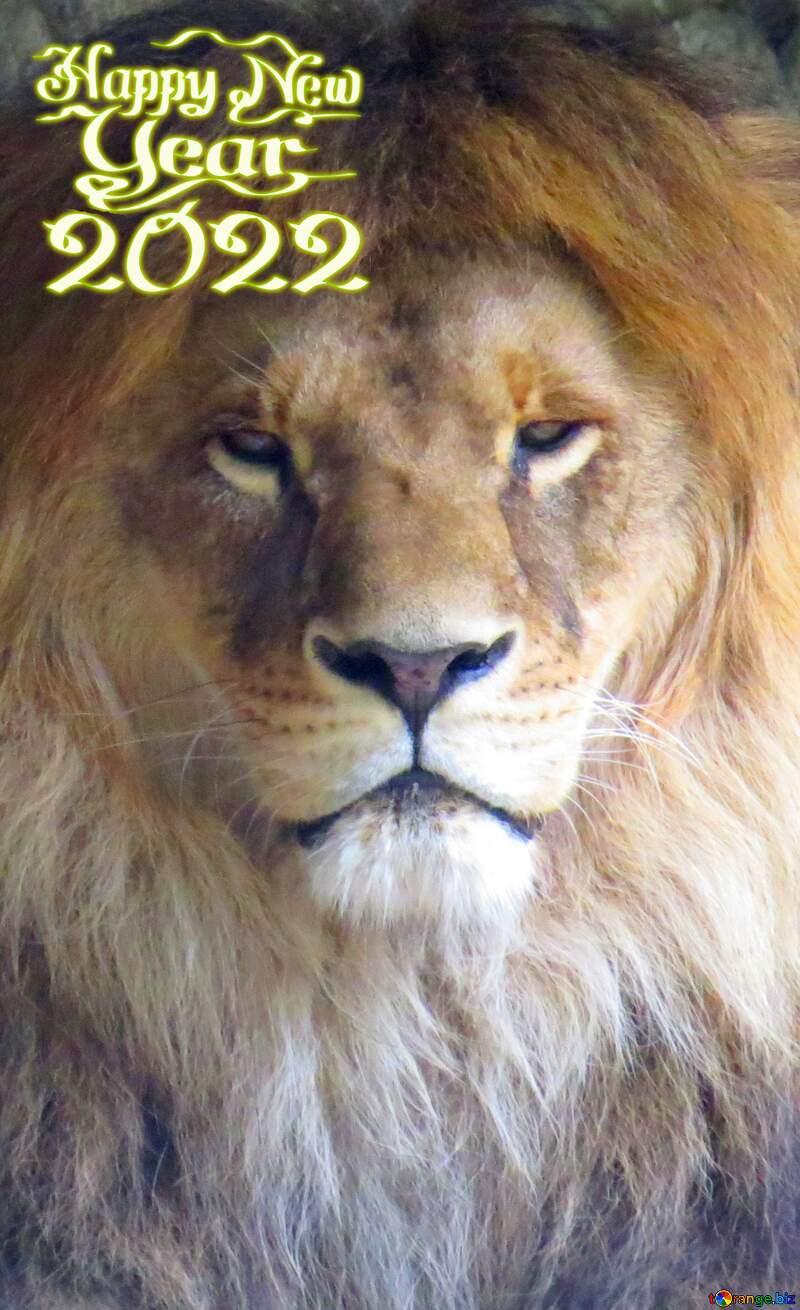 A lion happy new 2021 №44974