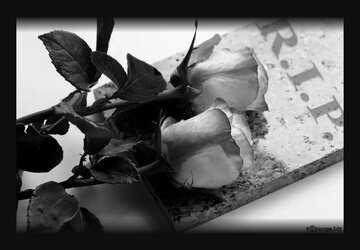 L'effetto del bianco e nero. Cornice di colore scuro.