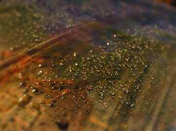 Blur frame.