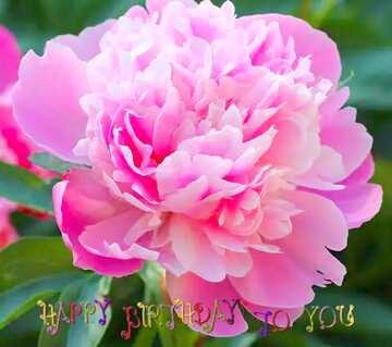 Die Wirkung von viel Licht. lebendige Farben. Bruchstück. Postkarte Alles Gute zum Geburtstag in Englisch.