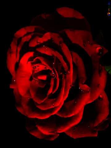 Die Wirkung der Rotation. Die Wirkung des viel dunklen. lebendige Farben.