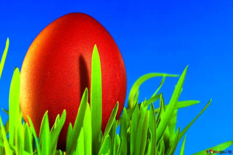 Easter Egg grass Blue background №8135