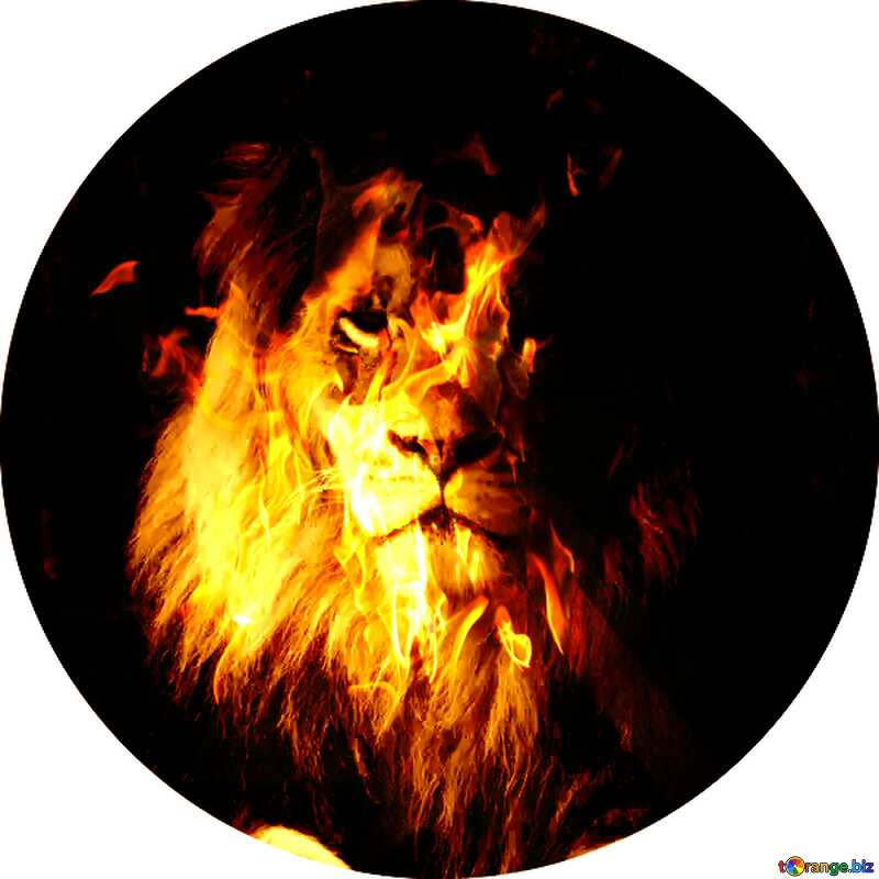lion fire profile picture №44974