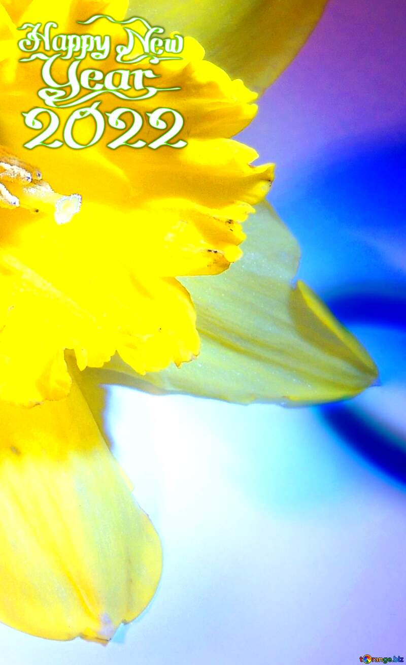 Narcissus flower happy new year 2021 №341