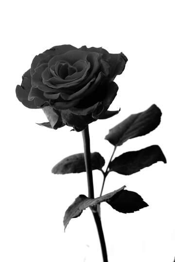 L'effetto del molto buio. L'effetto del bianco e nero.