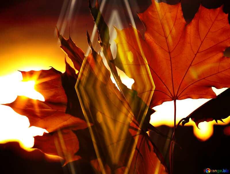Autumn leaves Dark pattern background №40887