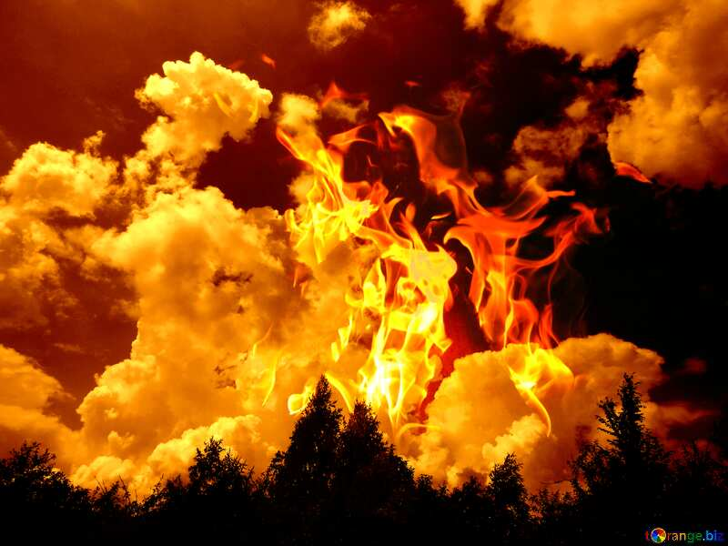 Beautiful sky above the forest Fire Hot №31599