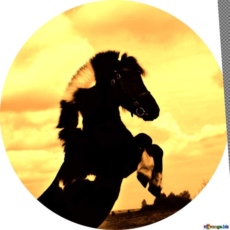 Pony profile image №2137