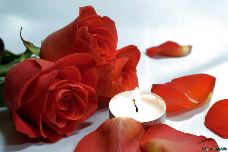 Beige color. Romantic  night . bed , roses  and  , petals candles.. №7275