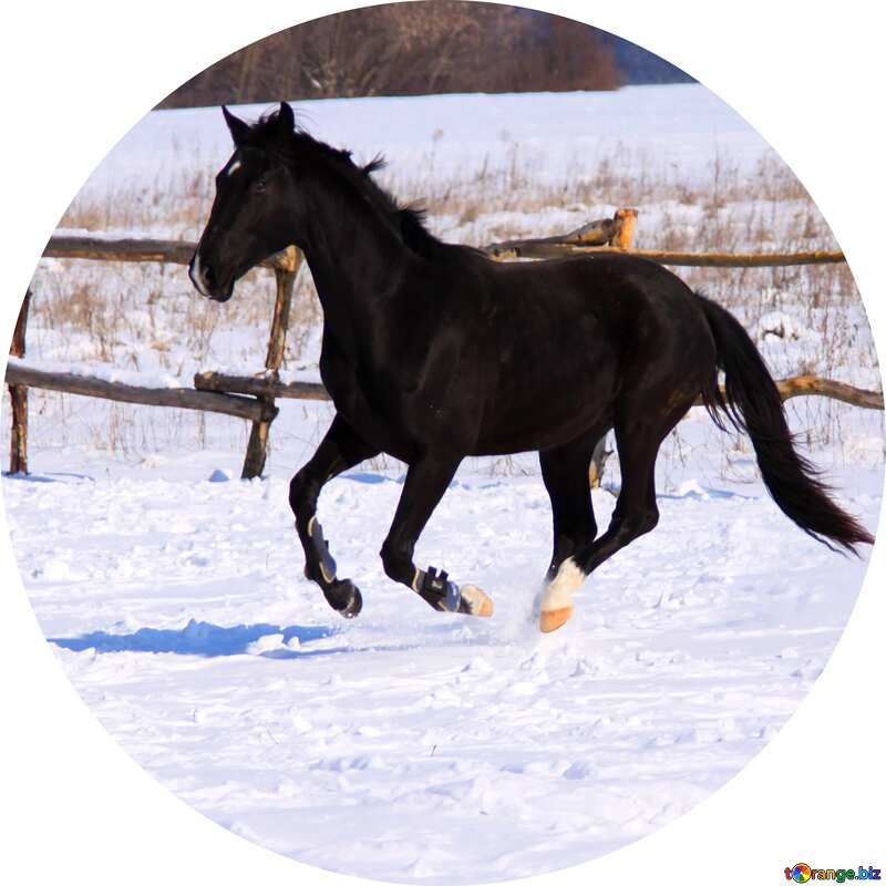 Black horse galloping  Image for profile picture in circle №472